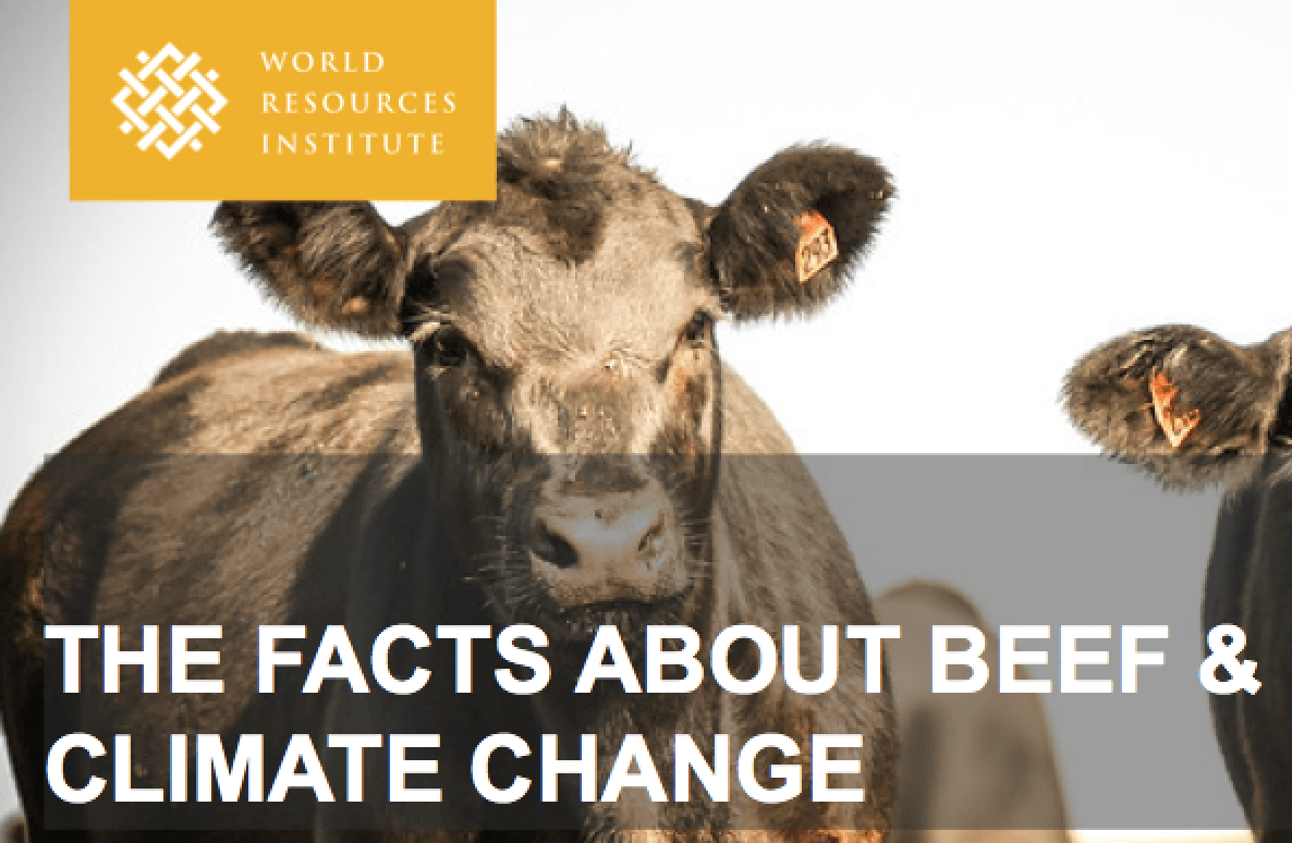 Animal Climate Handout